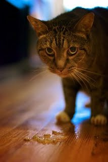 best cat litter for odor and tracking